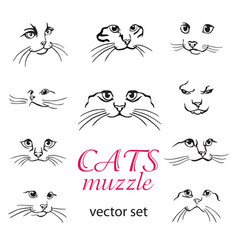 Cats muzzle set vector