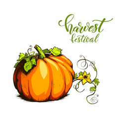 Colorful pumpkin hand drawn vector