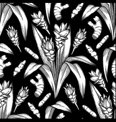 graphic curcuma pattern vector image