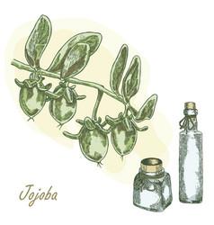 Jojoba fruit with glass bottles vector