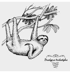 Pale throated sloth engraved hand drawn vector