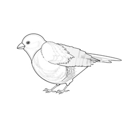 A monochrome sketch of titmouse vector
