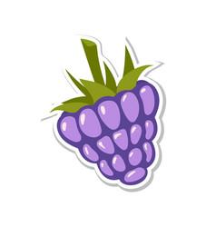 blackberry sweet fruit isolated berries on white vector image