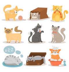 cute cats character different pose set vector image