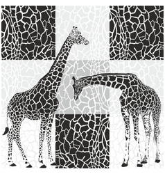 Giraffe patterns for wallpaper vector image