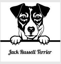 jack russell terrier - peeking dogs - - breed face vector image