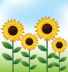 Sunflowers landscape background vector image