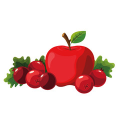 apple and cranberries design vector image