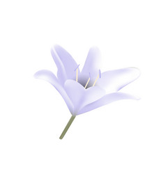Blue lily vector