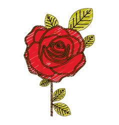 color pencil drawing of flowered red rose with vector image vector image