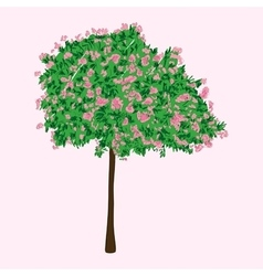 A blooming tree vector image
