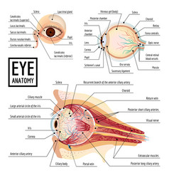 Eyeball infographic cartoon style vector