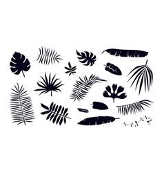 Set tropical plant leaf silhouettes vector
