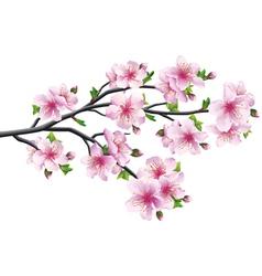 Cherry blossom japanese tree sakura vector image vector image