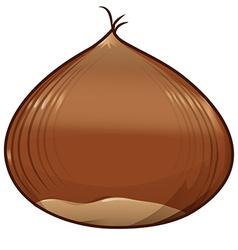 chestnut isolated on white background vector image