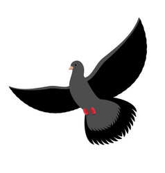 black dove isolated dark pigeon on white vector image vector image