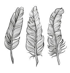 feathers set hand drawn llustration vector image