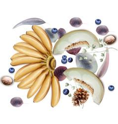 bananasmelon and blueberries watercolor vector image