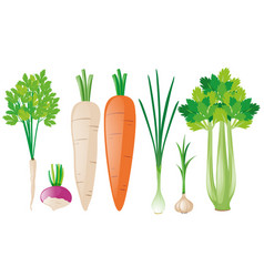 different types of root vegetables vector image