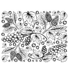 Hand drawn of amora verde berries and assyrtiko gr vector