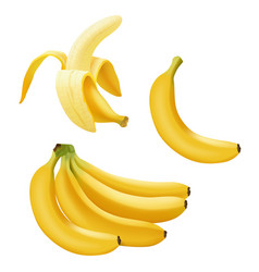 set realistic banana branch bananas vector image