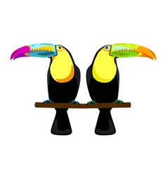 two toucans vector image