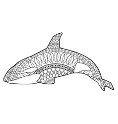 killer whale cetacea animal aquatic animals orca vector image