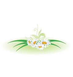 Aloe and daisy vector