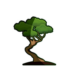 Cartoon bonsai tree natural foliage image vector