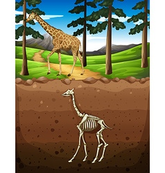 Giraffe on the ground and fossil underground vector