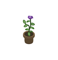 isolated flowerpot isometric flower vector image