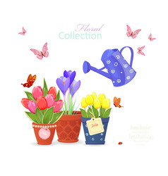 spring flowers planted in ethnic flowerpots and a vector image