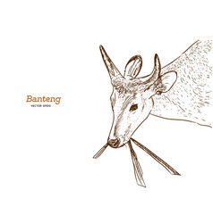 banteng red bull hand draw sketch vector image