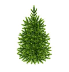 Fluffy green fir-tree vector