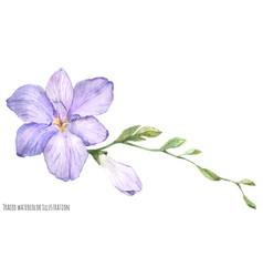 Freesia flower vector
