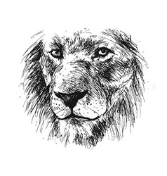 Hand sketch detail of a lions head vector