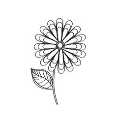 flower spring season sketch vector image