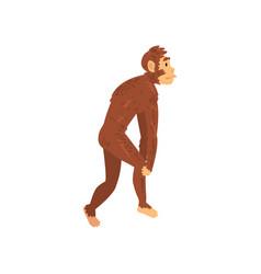 australopithecus biology human evolution stage vector image