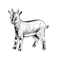 Hand drawn cute goatling farm animal vector