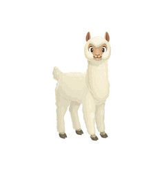 White lama guanaco alpaca llama cartoon animal vector