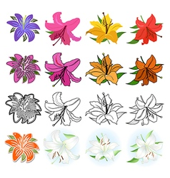 Lilies set vector image vector image