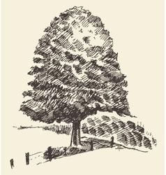Old tree vintage hand drawn sketch vector image