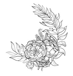 bouquet of peony element of design vector image