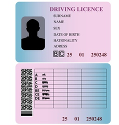 Driving license vector image