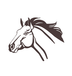 Horse head drawn with contour lines isolated on vector