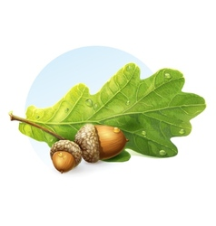 Image on white background autumn acorns with green vector