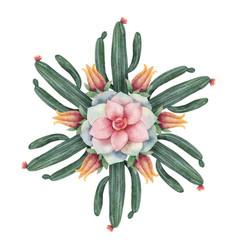 watercolor round mandala cacti and vector image