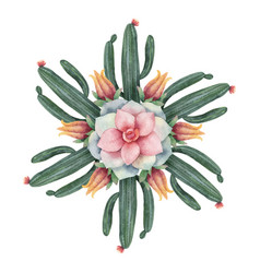 Watercolor round mandala of cacti and vector