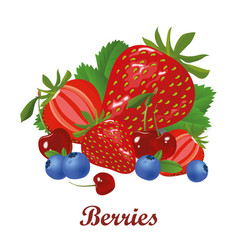 berries isolated on white vector image