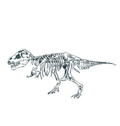 Dinosaur skeleton sketch isolated clip art vector